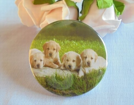 button 4 golden retriever puppy`s  ca.58 mm