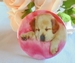 button puppy golden retriever slaapt ca.58 mm